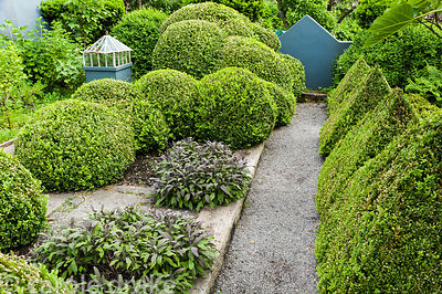The kitchen garden is surrounded by grey painted walls and features box clipped into pyramids and curvaceous mounds intersper...