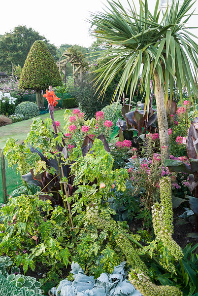 Island bed in the front garden is full of colourful exotics including a tall cordyline, purple leaved cannas, pink cleomes, e...