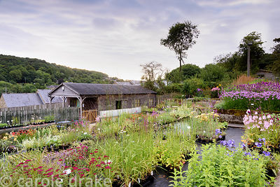 Plant sales area at Dove Cottage Nursery & Garden, Halifax, West Yorkshire