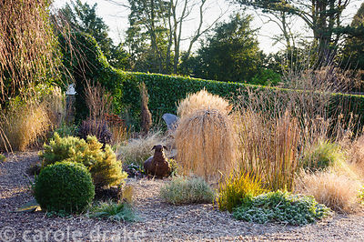 Gravel garden includes weeping conifer Larix decidua 'Puli', grasses including Pennisetum 'Red Head', bronze fennel, box, pin...