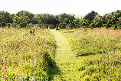 Meadow with mown path leading down to the orchard at Sea View, Cornwall in June