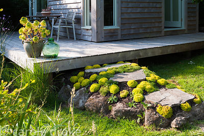 A raised section of path encrusted with mounds of Saxifraga 'Cloth of Gold' leads up to the deck around Sara's garden office....