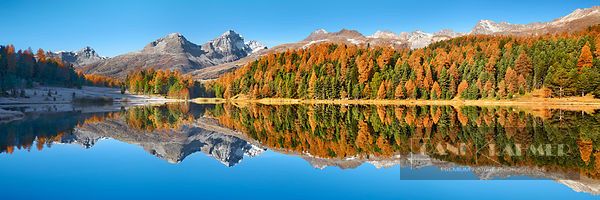 Larch forest at Stazersee (lat. larix decidua) - Europe, Switzerland, Graubünden, Engadin, St. Moritz, Stazersee (Alps, Rhaet...