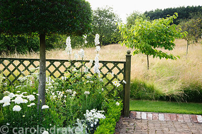 The White Garden features clipped Phillyrea latifolia standing in box edged beds containing Allium nigrum, Leucanthemum x sup...