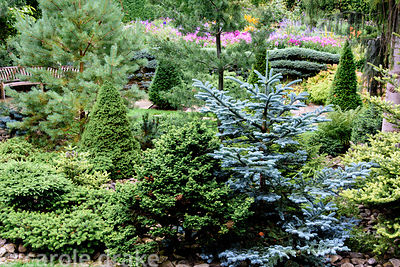 The Pinetum planted with conifers of varying colours and textures including pines and firs at York Gate Garden, Adel in July