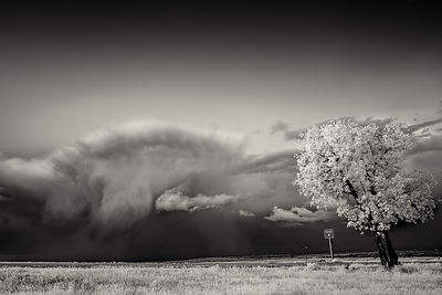 Tree and mushroom raincloud | Wyoming | 2014