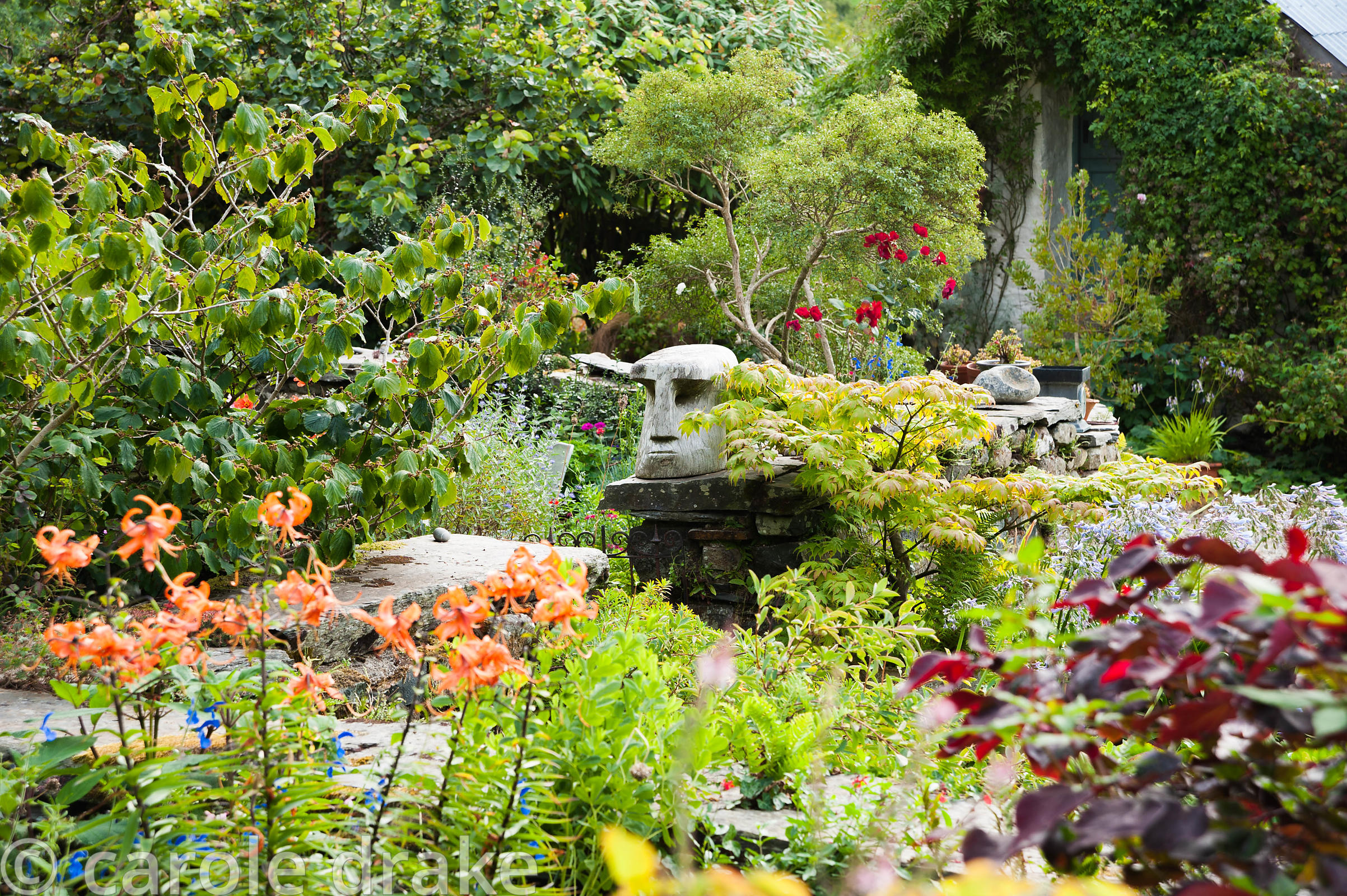 Chunky wooden head sits on the wall around the front garden surrounded by orange tiger lilies and acers. Dyffryn Fernant, Fis...