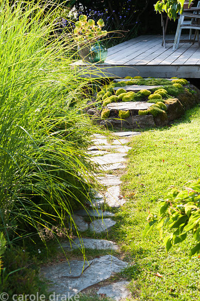 A path leads past miscanthus toward steps surrounded by mounds of Saxifraga 'Cloth of Gold' that lead up to the deck around S...