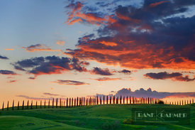 Cloud impression over corn field with cypresses - Europe, Italy, Tuscany, Siena, Buonconvento, Monteroni d'Arbia - digital
