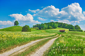 Field path durch dandelion meadow - Europe, Germany, Bavaria, Upper Bavaria, Bad Tölz-Wolfratshausen, Egling - digital - Gett...