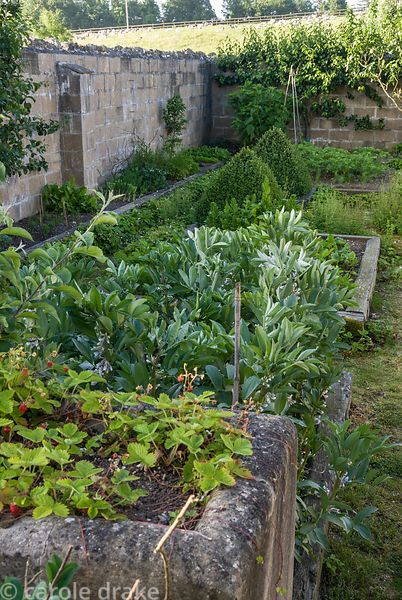 Kitchen garden with raised beds made with railway sleepers, featuring decorative clipped box, wall trained fruit trees and wi...