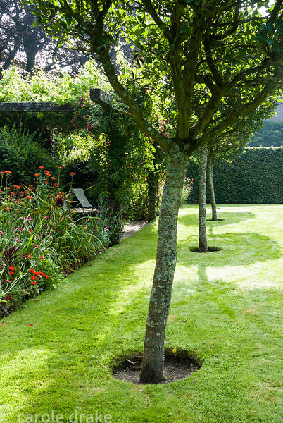A line of Crataegus x lavallei runs between the formal pond and a border full of red shrubs and perennials including Cotinus ...