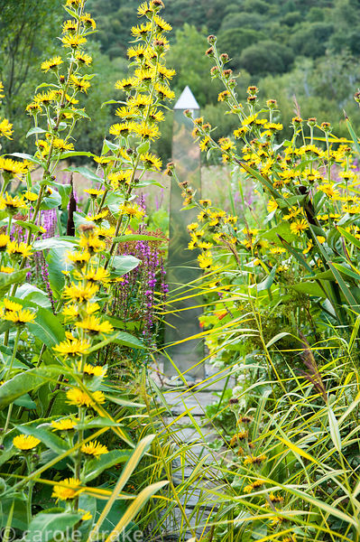 Metal obelisk in the bog garden is surrounded by yellow Inula afghanica, purple loosestrife, petasites and bullrushes. Dyffry...