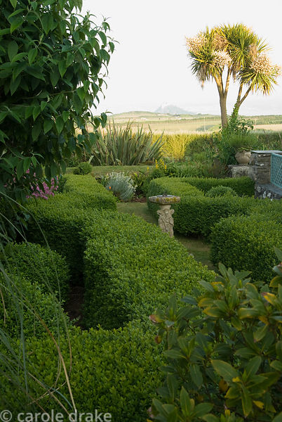 View across box edged beds and surrounding fields to St Michael's Mount framed by tall cordylines. Ednovean Farm, Marazion, C...