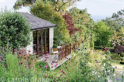 Debbie's garden studio is built into the sloping garden, here viewed across Dianthus carthusianorum, echinops and carnations ...