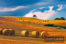 Hay ball on mown meadow - Europe, Italy, Tuscany, Siena, Buonconvento, south of - digital