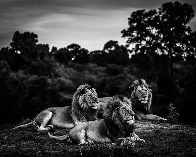 01123-Three_brothers_after_sunset_Kenya_2019_Laurent_Baheux