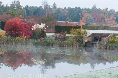Misty autumn morning at Marks Hall Gardens and Arboretum with plume pampas grass and deciduous shrubs and trees turning warm ...