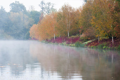 Mist rises from the Upper Pond at Marks Hall Gardens and Arboretum on an autumn morning with Betula utilis var. jacquemontii ...