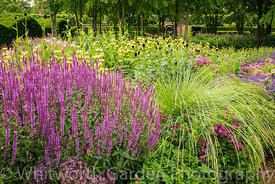 The Perennial Meadow at Scampston Hall Walled Garden, North Yorkshire, designed by Piet Oudolf. Planting includes Festuca mai...
