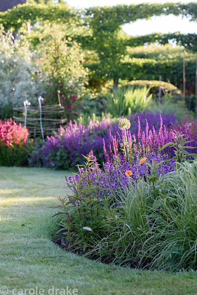Border with double orange poppies, Erysinum 'Bowles' Mauve' and Salvia nemerosa 'Caradonna' in foreground and Penstemon 'Garn...