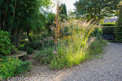 Gravel garden on the drive with grasses and Verbena bonariensis catching the afternoon sun