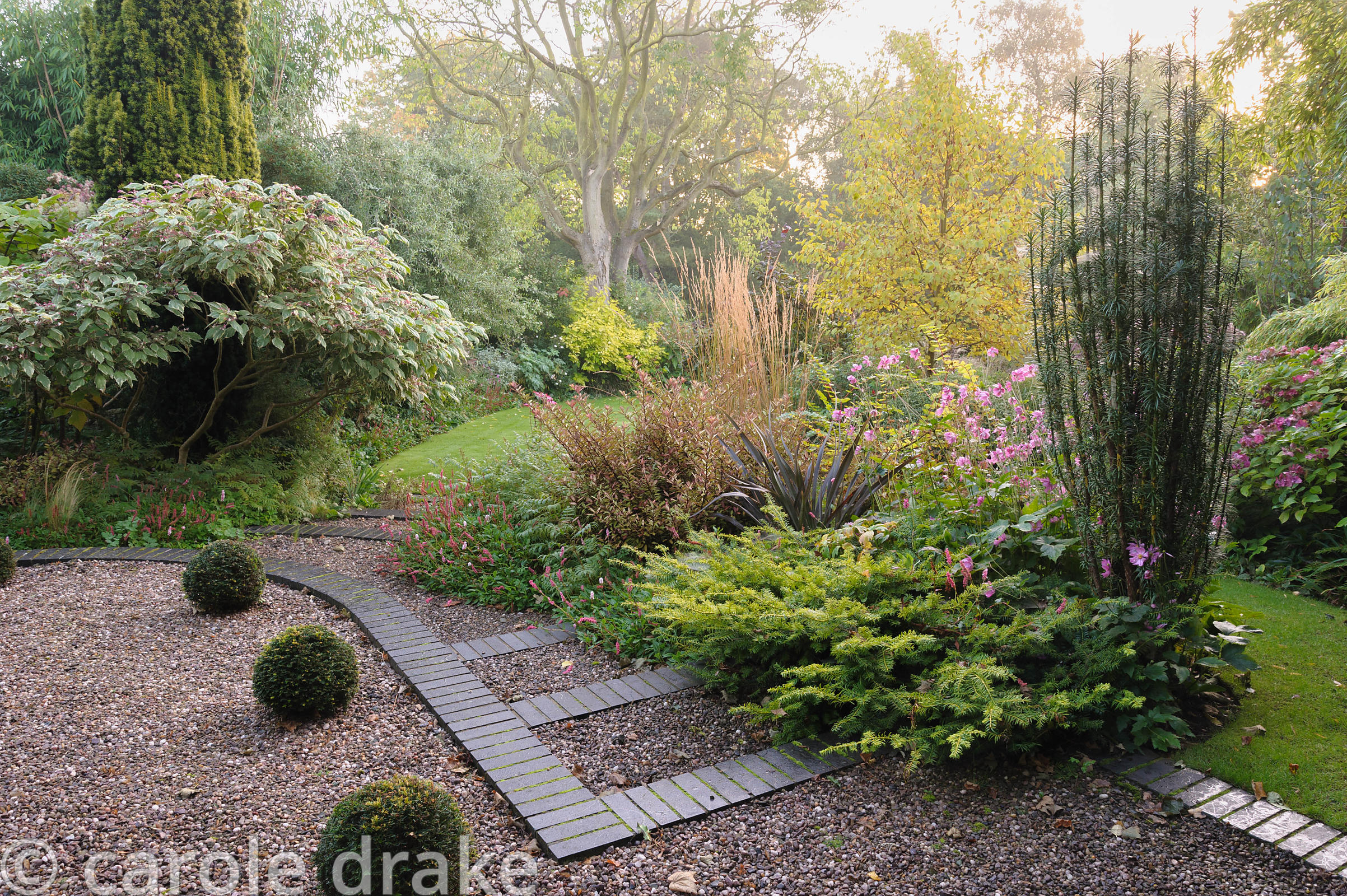 Border beside shallow steps and a line of yew spheres in the front garden is planted with Taxus baccata 'Corleys Coppertip', ...