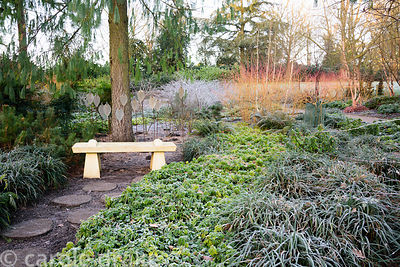 Stone seat in the Winter Garden at Mottiflont surrounded by frosted leaves of Pachysandra terminalis and ferns, with bright o...