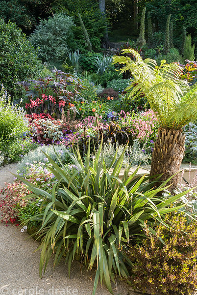 Exuberant planting ends at the retaining wall where the cool, minimalist courtyard begins. Planting includes tree ferns, phor...