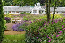 Geranium psilostemon in the Katsura Grove looking towards the Perennial Meadow and the Victorian conservatory. Scampston Hall...