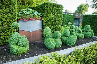 Steel container with decorative lead 'collar' planted with hostas and red annuals set into yew hedge behind raised bed of top...