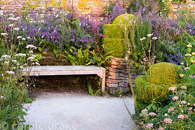 Wooden bench framed by clipped box, Nepeta 'Six Hills Giant' and other plants including Valeriana officinalis, Pimpinella maj...