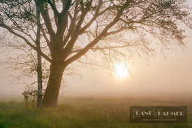 Misty mood with tree and sun - Europe, Germany, Bavaria, Upper Bavaria, Bad Tölz-Wolfratshausen, Benediktbeuern, Bichl - digital