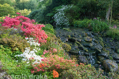 One of the garden's 18th century cascades framed by colourful azaleas. Minterne, Minterne Magna, Dorchester, Dorset, DT2 7AU, UK