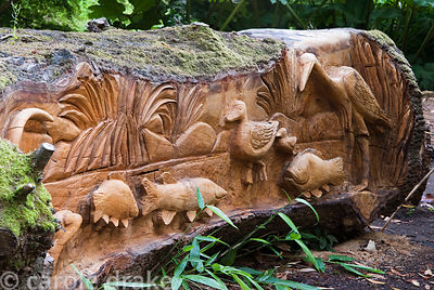 Felled oak carved with seats and scenes of birds, fish and animals by chainsaw sculptor Matthew Crabb. Abbotsbury Subtropical...