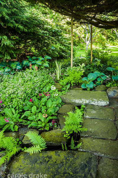 Area of shade and moisture loving plants including hostas, ferns and primulas