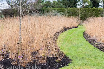 Crab apples, Malus 'Evereste', underplanted with a river of grasses at Ellicar Gardens, Notts