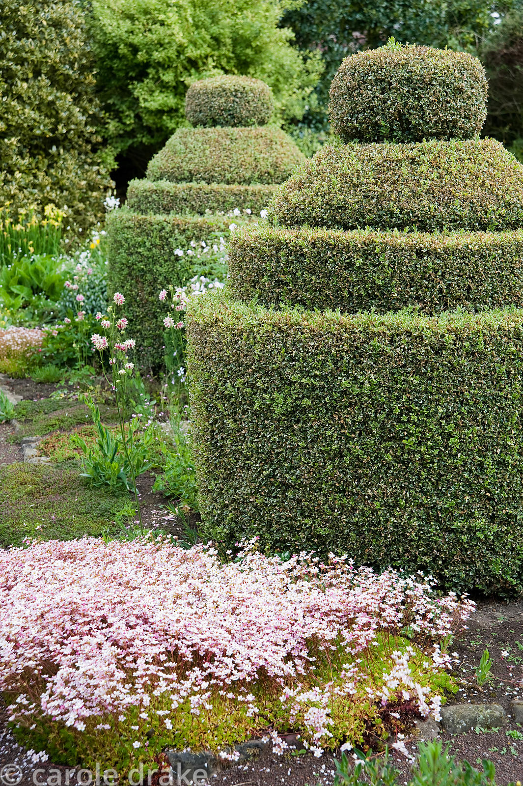 The Flower Garden features strong blocks of box and yew that frame cottage garden plants and flowers, here including saxifrag...