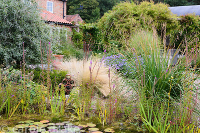 Naturalistic pond in a garden in rural Nottinghamshire in September surrounded by planting including Stipa tenuissima, asters...