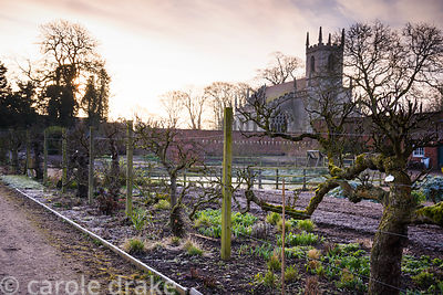Espaliered apple trees in the Kitchen Garden at Doddington Hall, Lincolnshire on a March morning