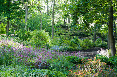 The shady dell garden is a matrix of planting including ferns, euphorbia, pink Silene dioica, Solomon's Seal and dark leaved ...
