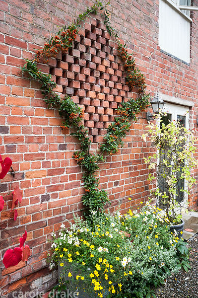 Pyracantha trained around decorative pattern in the wall of the barn. Rhodds Farm, Kington, Herefordshire, UK