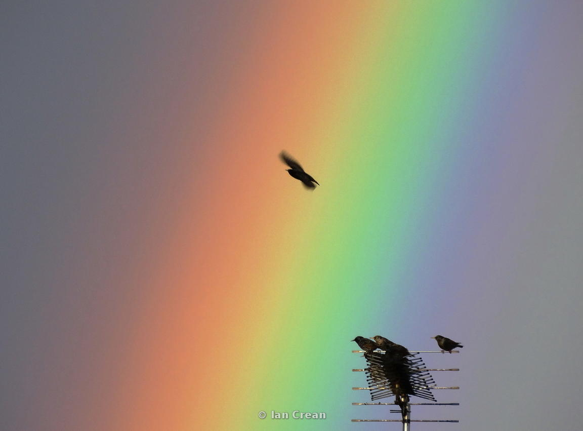 Rainbow Flight