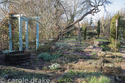 Back garden with raised beds constructed from railway sleepers for displaying alpine plants, with flowers of Cyclamen coum an...