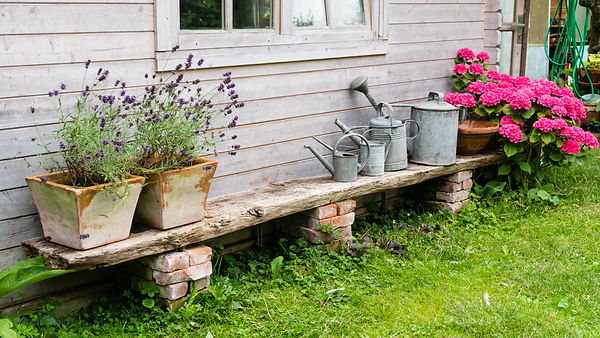 Lavende planters, watering cans and flowering hydrangea - still life