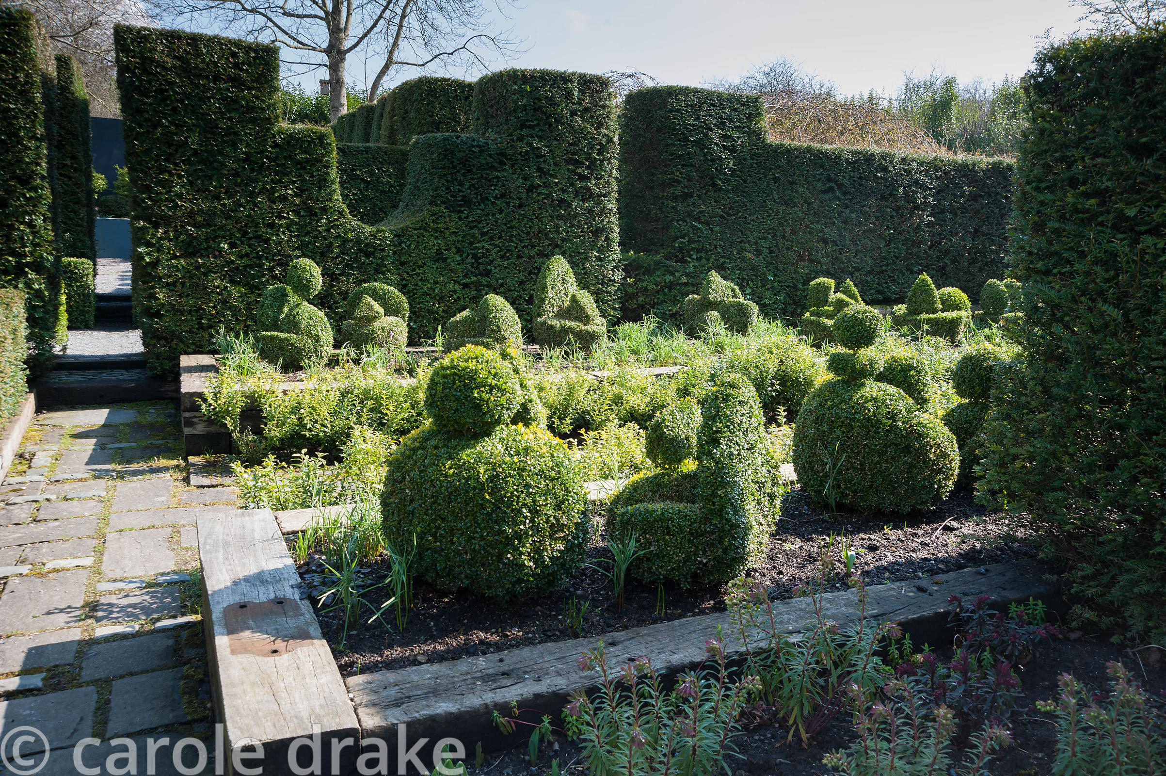 Formall garden full of box topiary shapes in raised beds framed by tall yew hedges.