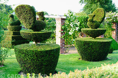 Topiary garden features yew clipped into peacocks and swans surrounding pergola festooned with climbers including roses, hone...