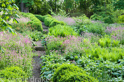 Paths edged with undulating hedges of clipped box lead down into the dell garden, awash with a matrix of planting including f...