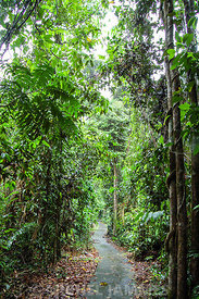 Rain Forest Daintree national Park