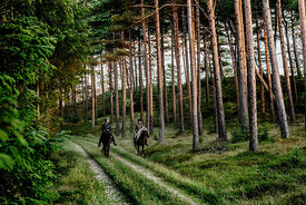 Danish women riding horses in Thy woods, Denmark